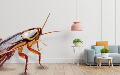Are Pests Destroying Your Home? Stop It Now!